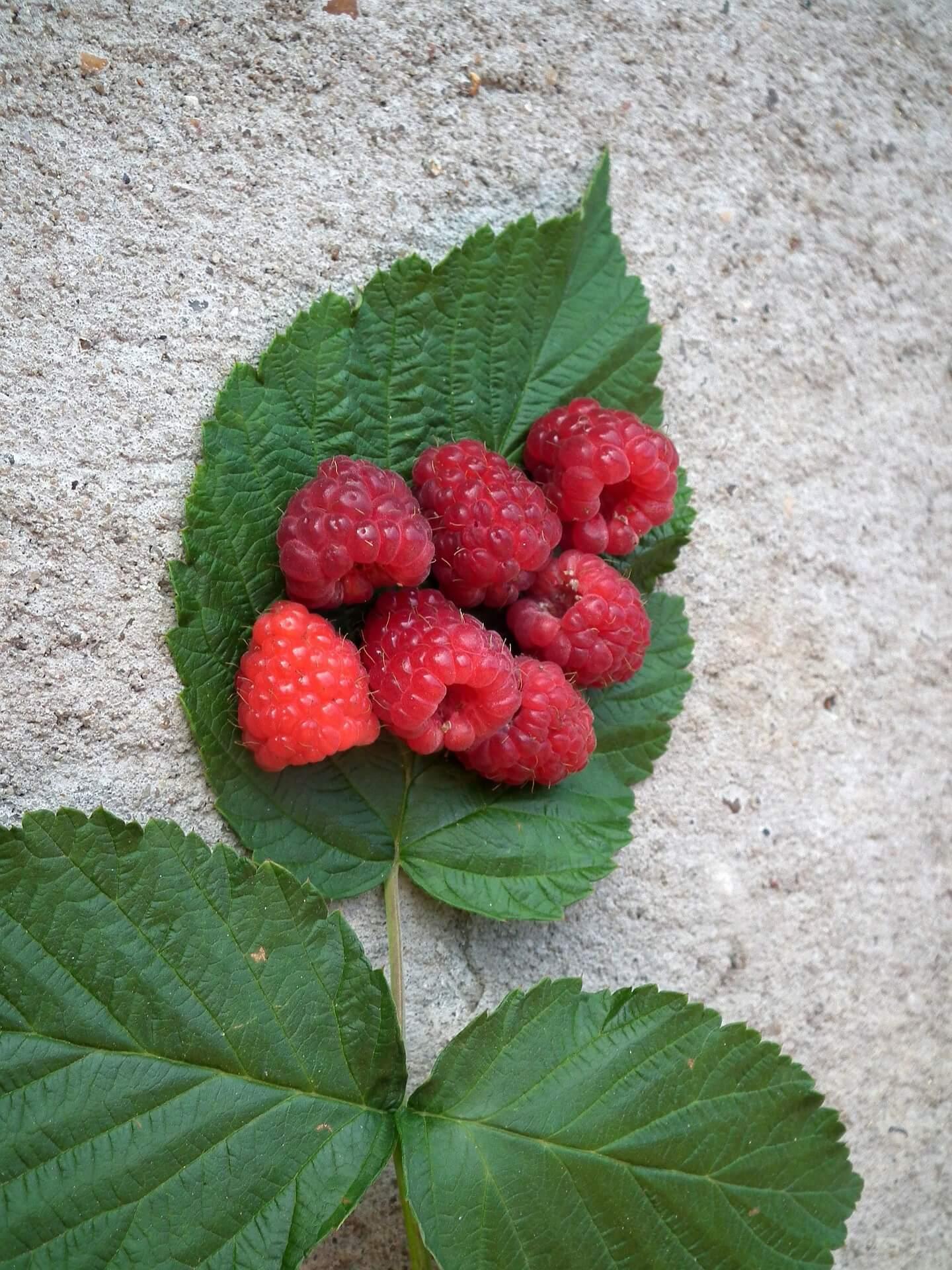 Raspberry Leaf Tea PMS remedies