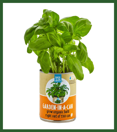 Grow Basil in a Can (Thrive Market) - Vegan Christmas Stocking Stuffer Ideas