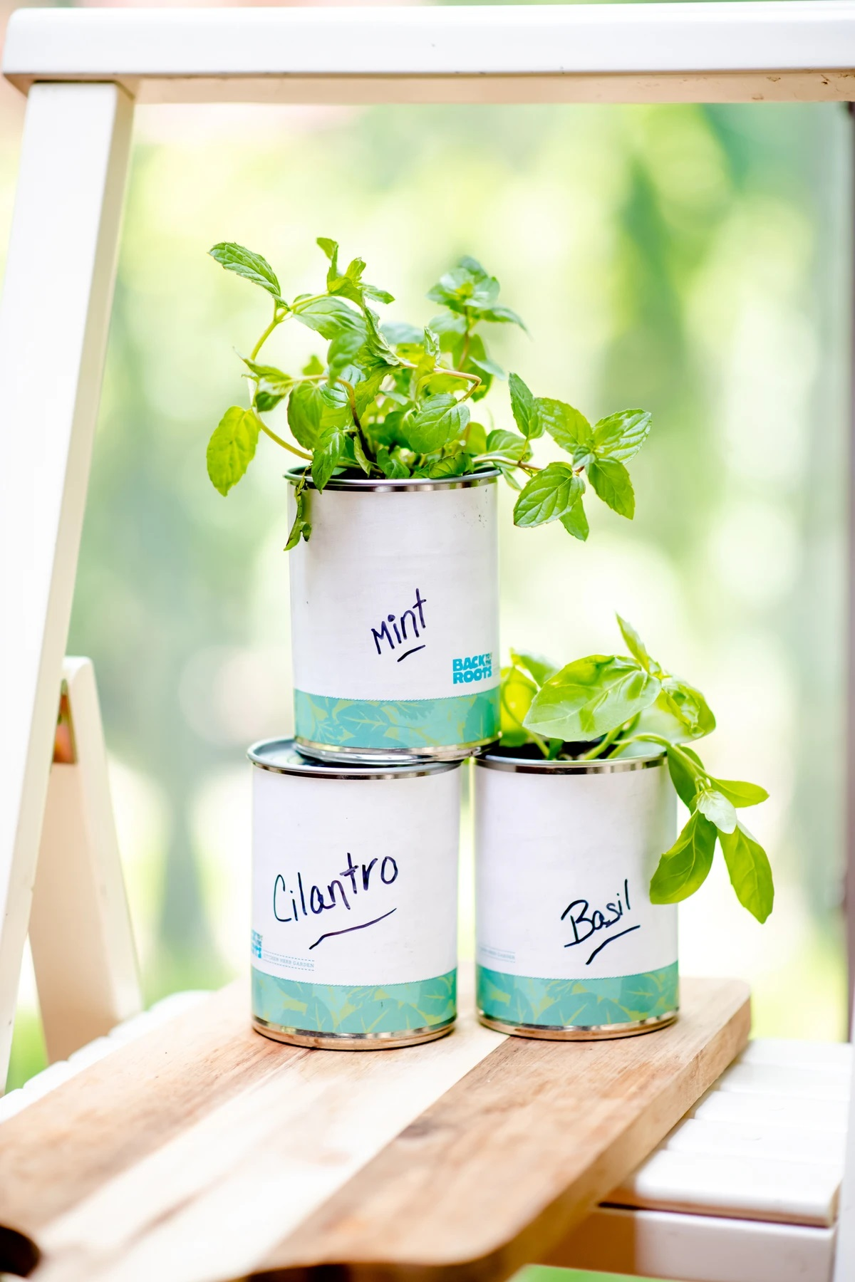 Back to the Roots Kitchen Herb Garden in a Can Kit
